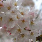 Japan_2013_019